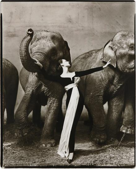 Richard Avedon-Dovima With Elephants, Evening Dress By Dior, Cirque Dhiver, Paris, August-1955