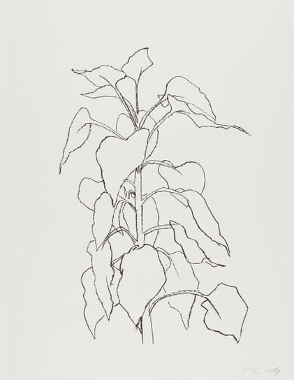 Ellsworth Kelly-Sunflower Ii, From Series Of Five Plant And Flower Lithographs-2004