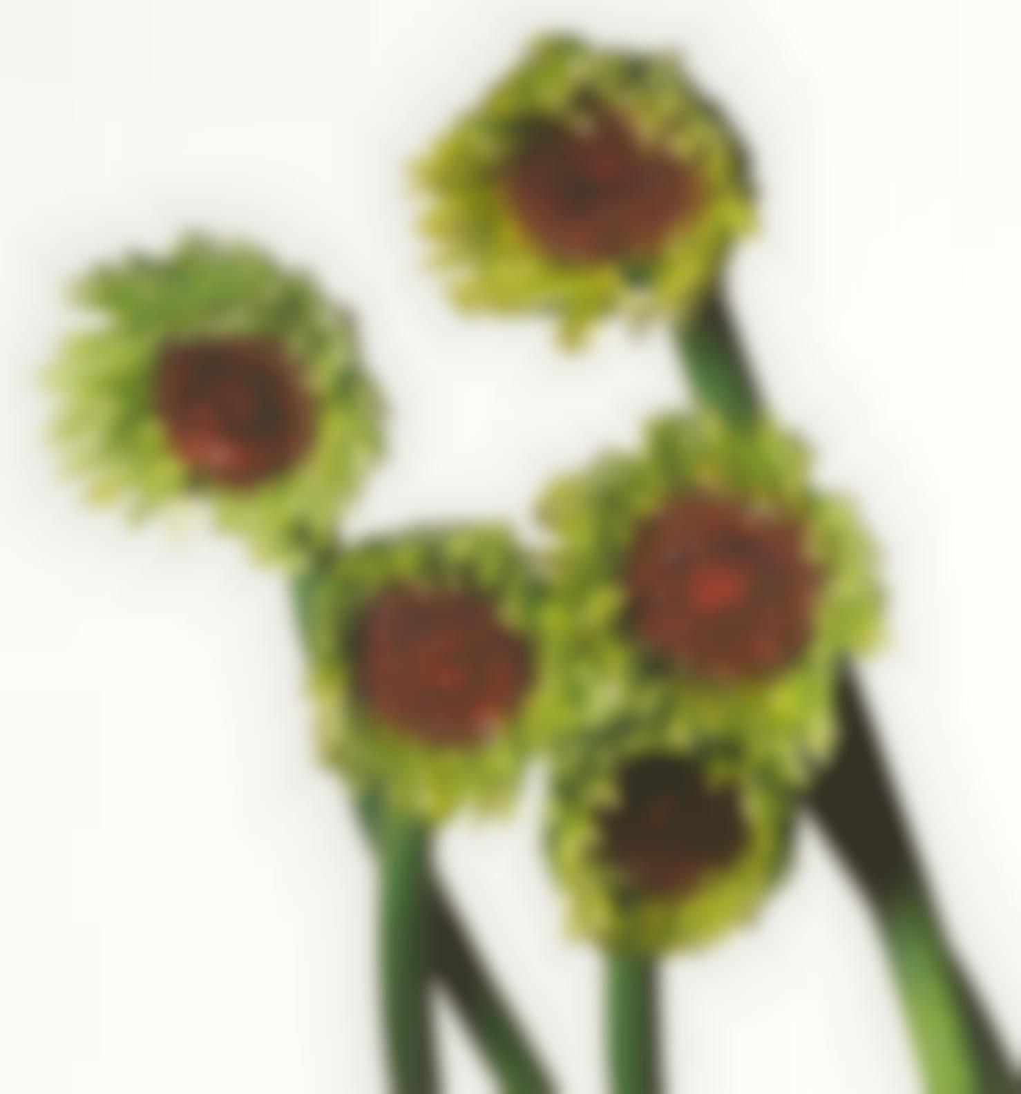 Irving Penn-Gerbera Daisy/Gerbera Asteracaea (New York, 2006)-