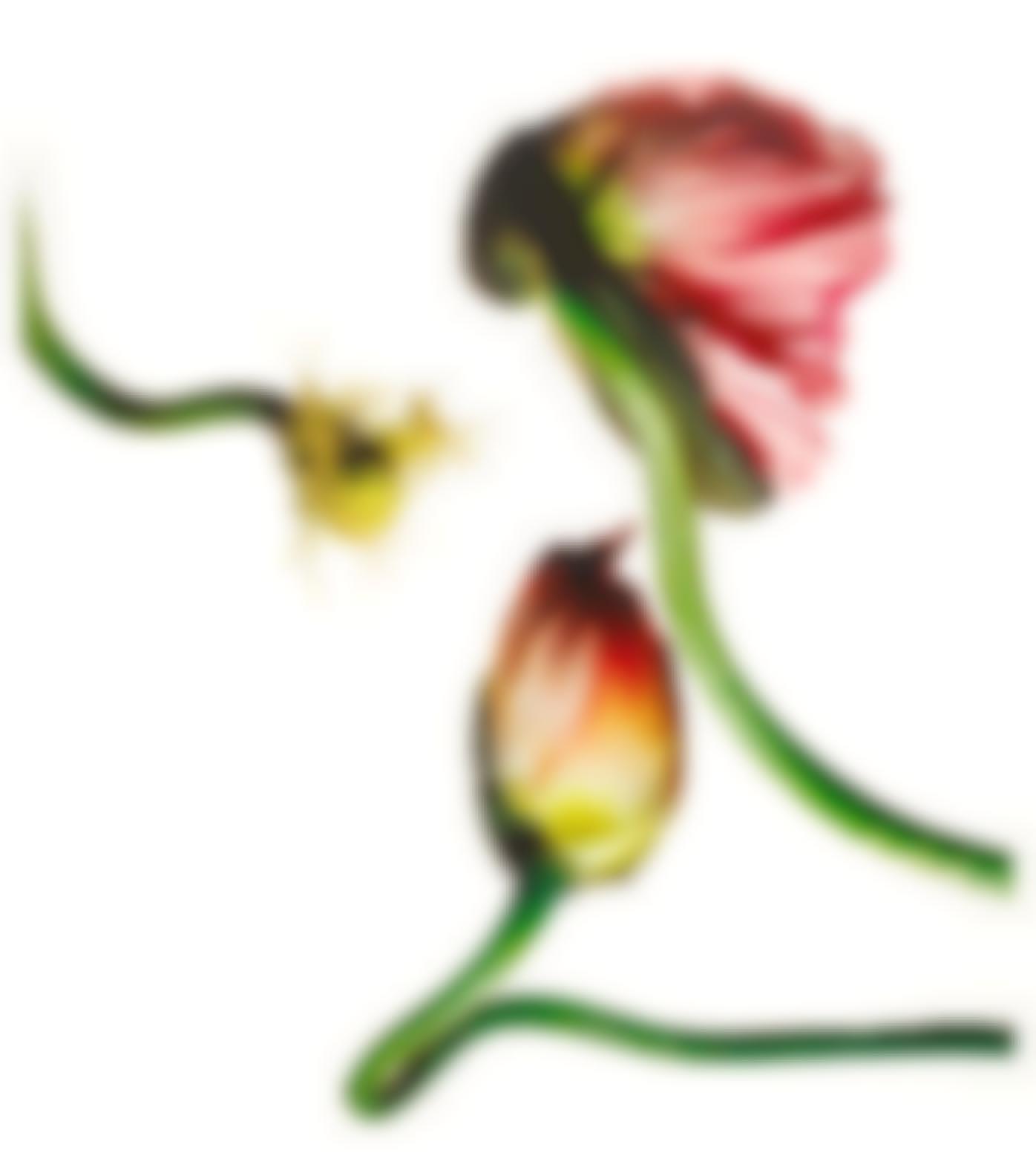 Irving Penn-Icelandic Poppy/Papaver Nudicaule (New York, 2006)-