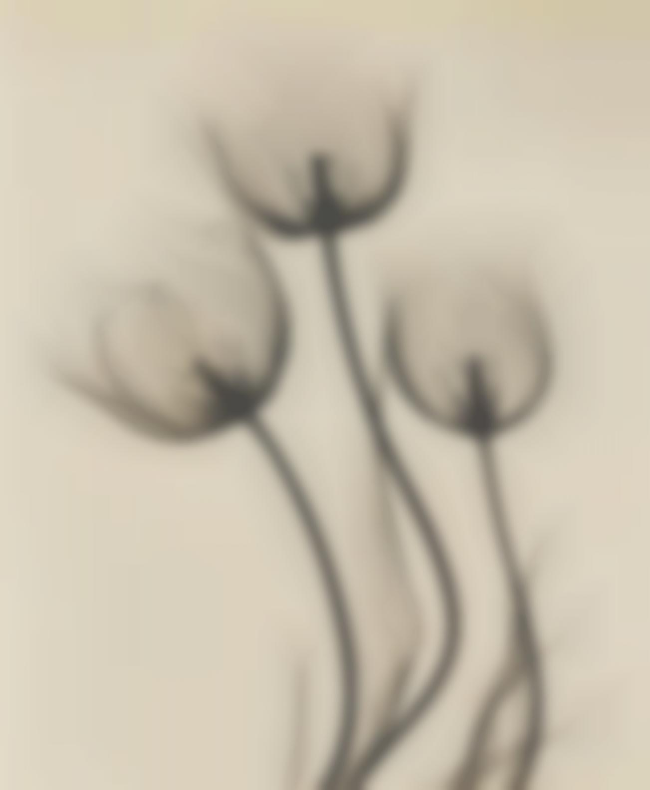 Dr. Dain L. Tasker-Tulips; Lily; And Strelitzia (Bird Of Pardise), c. 1930-