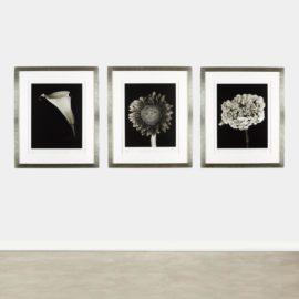 Chuck Close-Hydrangea, Calla Lily And Sunflower-2007