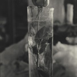 Josef Sudek-Rose In Glass Beaker