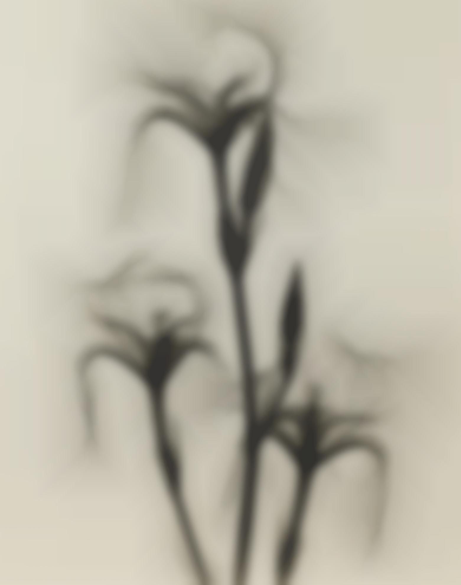 Dr. Dain L. Tasker-Selected X-Rays Of Flowers-1930
