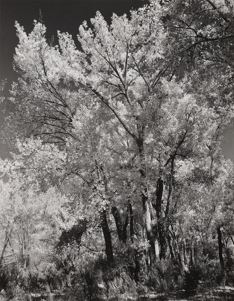 Ansel Adams-Autumn, Chama Valley, New Mexico-1951