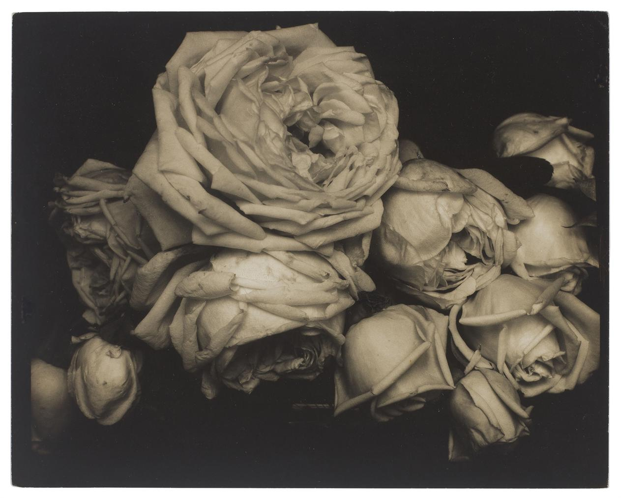Edward Steichen-Heavy Roses, Voulangis, France-1914