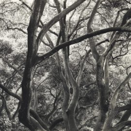Dorothea Lange-Under The Oaks, 1163 Euclid Avenue, Berkeley, California, 1952-1954