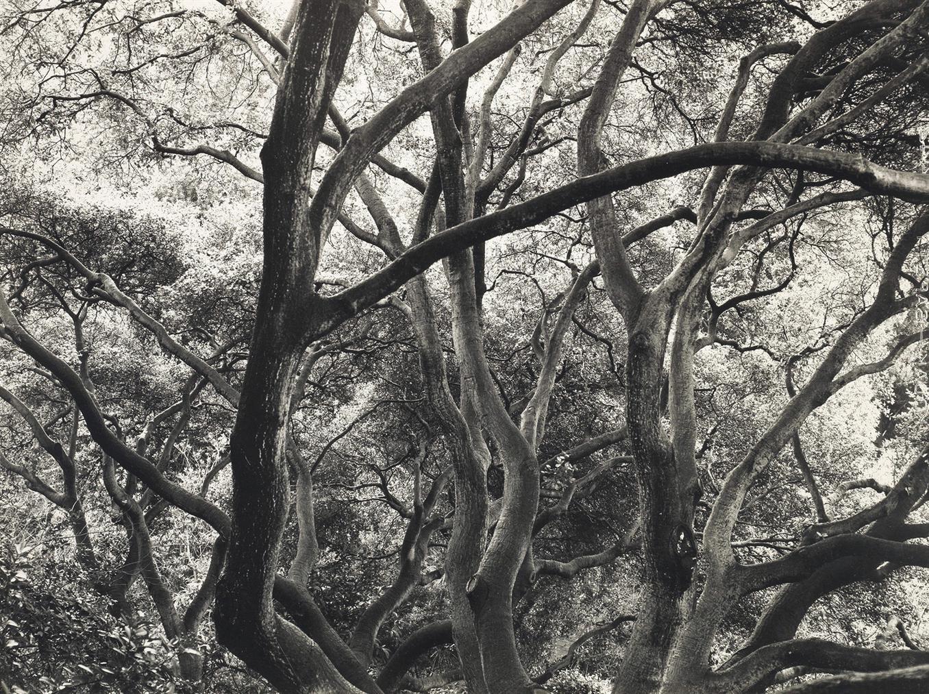 Dorothea Lange-Under The Oaks, 1163 Euclid Avenue, Berkeley, California, 1952-1954-