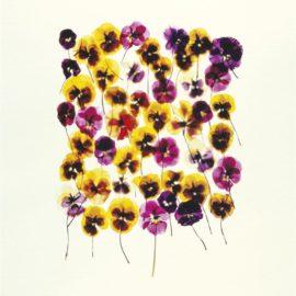 Adam Fuss-Untitled-1994