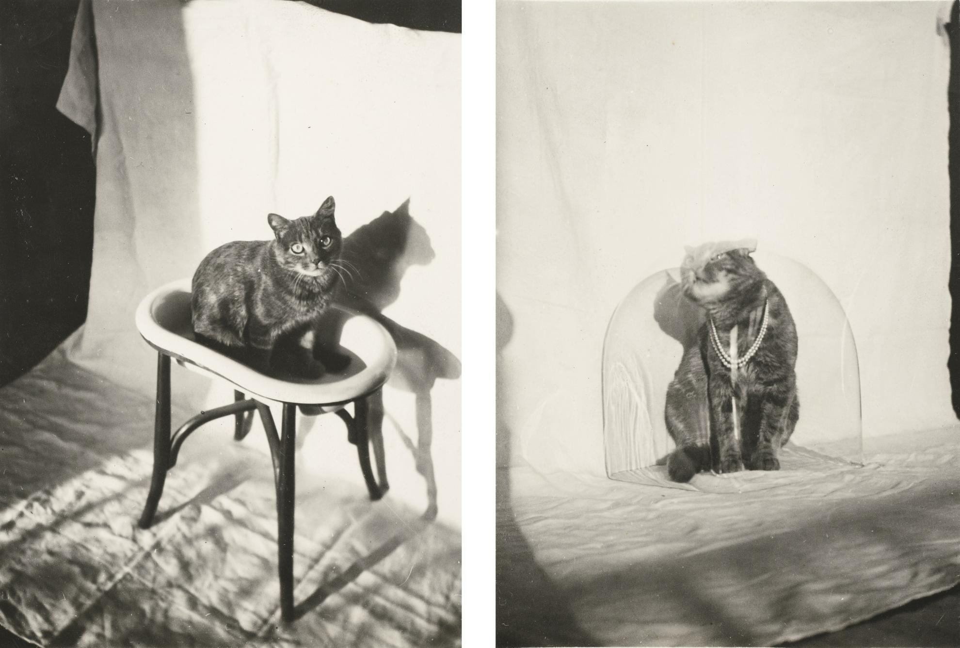 Claude Cahun-(i) Chat A La Cloche, 1925 - 1930 (ii) Chat A La Vasque, 1925 - 1930-1930