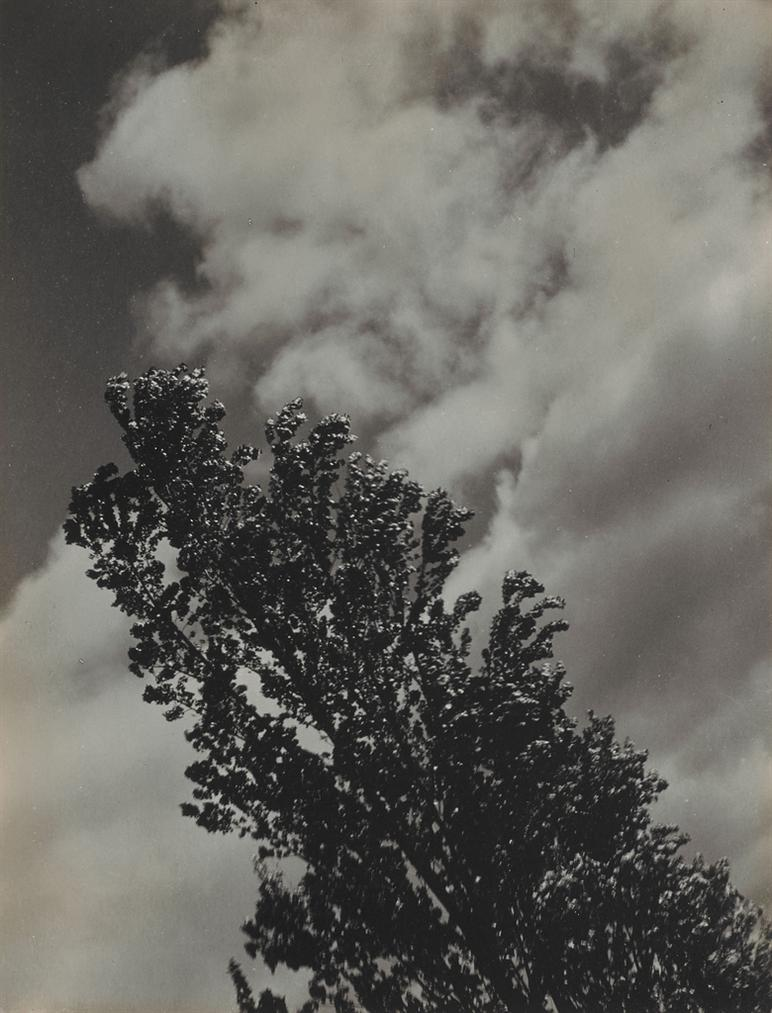 Alfred Stieglitz-Song Of The Sky And Trees-1923