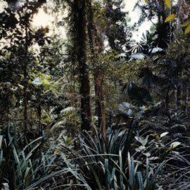 Thomas Struth-Paradise 7, Daintree / Australia-1998