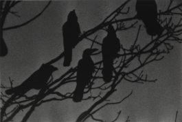 Masahisa Fukase-Nayori-1976
