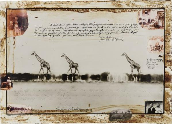 Peter Beard-Giraffes In Mirage On The Taru Desert Kenya For The End Of The Game/Last Word From Paradise-1960