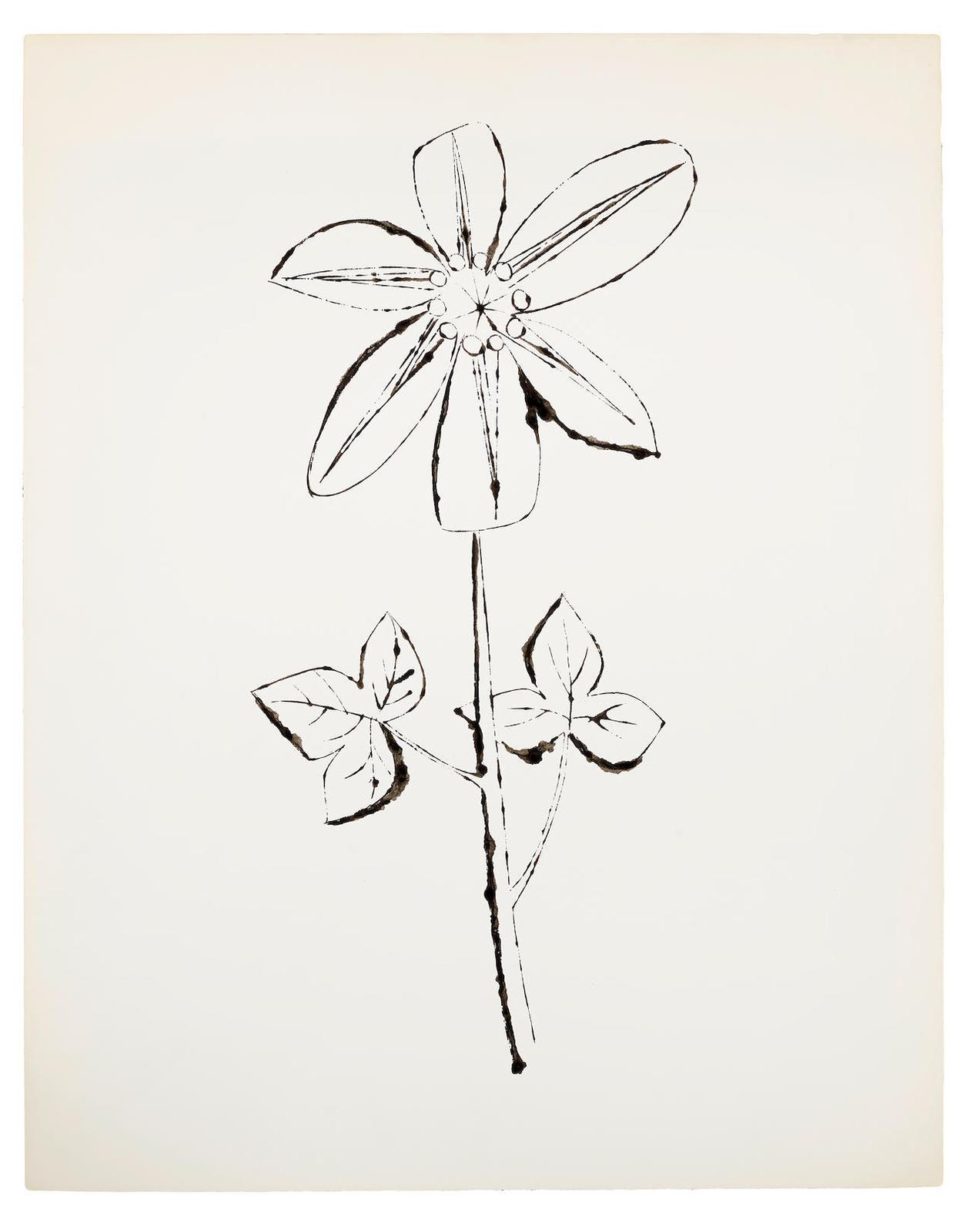 Andy Warhol-Flower-1956