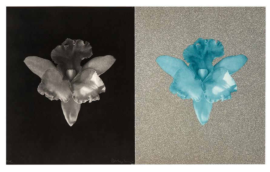 Robert Mapplethorpe-Tampa Orchids-1986
