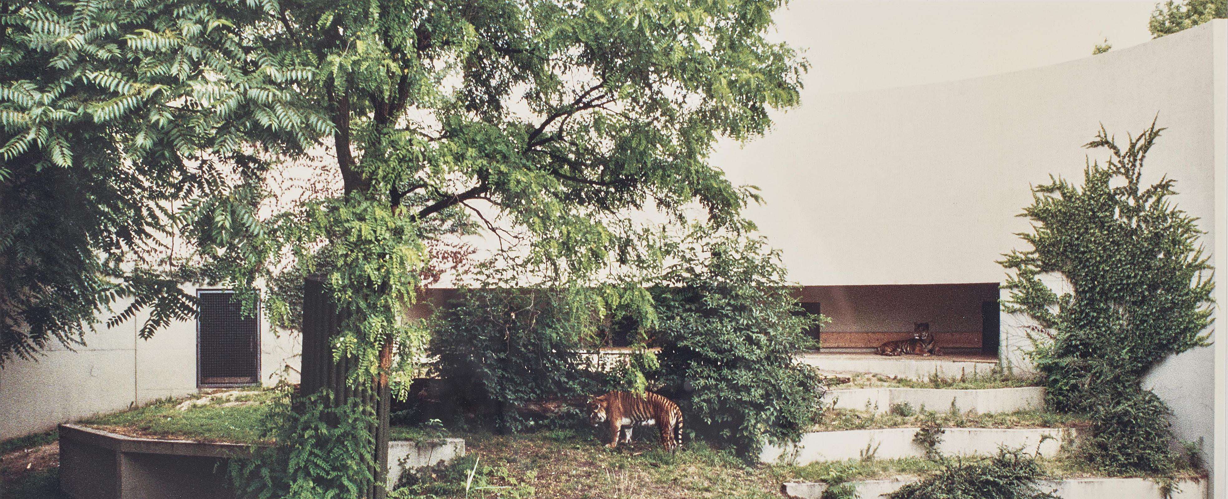 Candida Hofer-Zoologischer Garten Stuttgart I (Zoo Stuttgart I)-1991