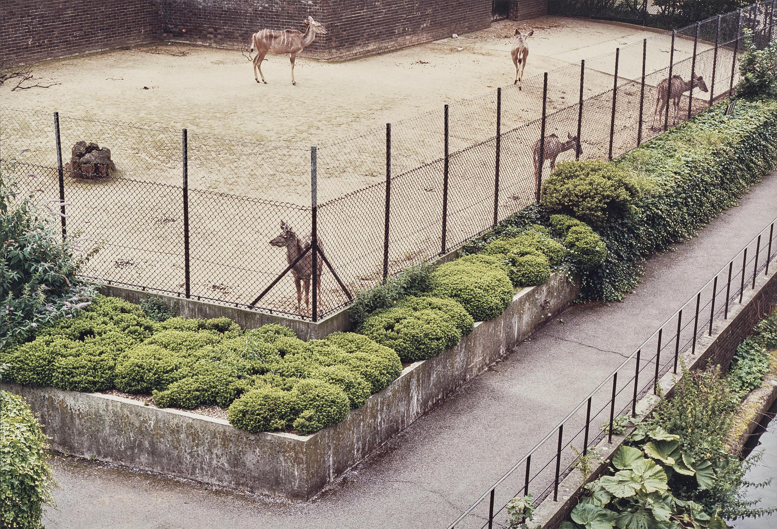 Candida Hofer-Zoologischer Garten London II (London Zoo II)-1992