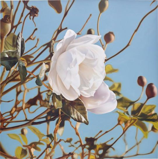 Mustafa Hulusi-Winter Rose-2006