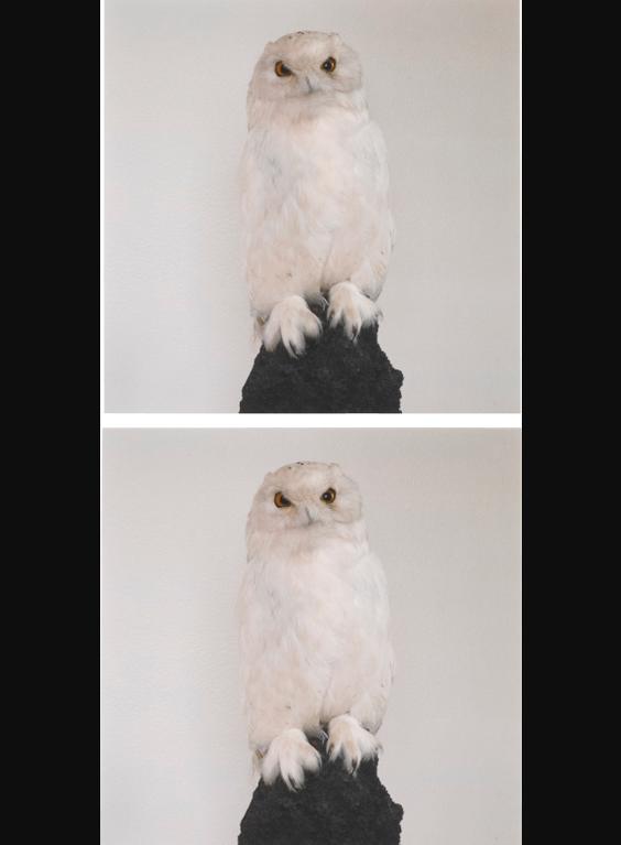 Roni Horn-Dead Owl-1997