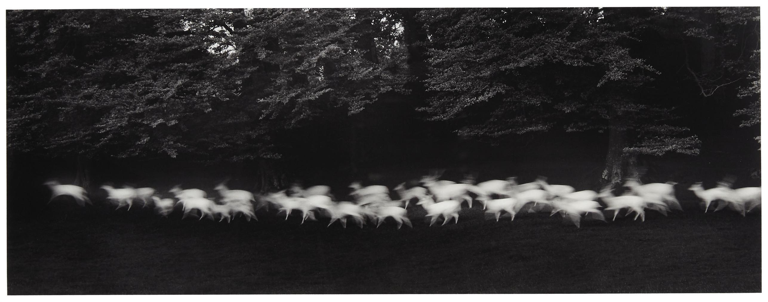 Paul Caponigro-Running White Deer, Wicklow, Ireland-1967