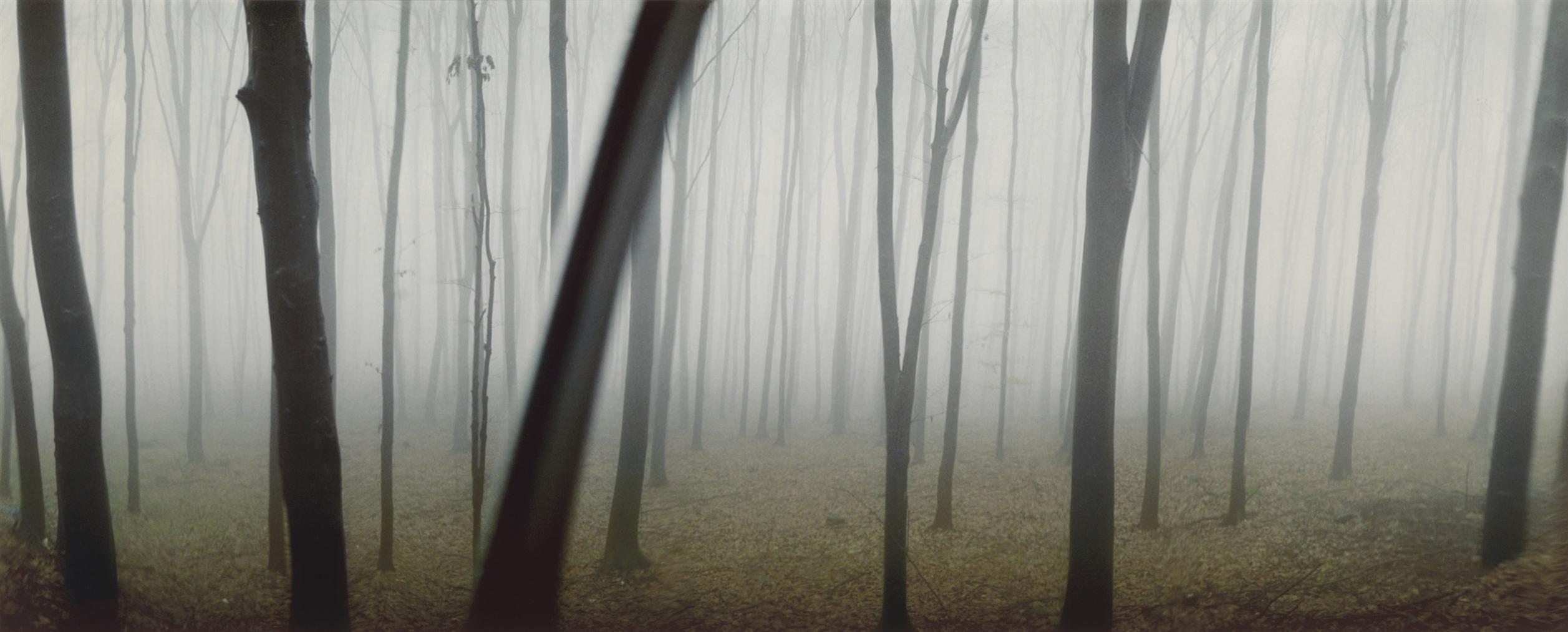 Sylvia Plachy - Transylvanian Woods-2001