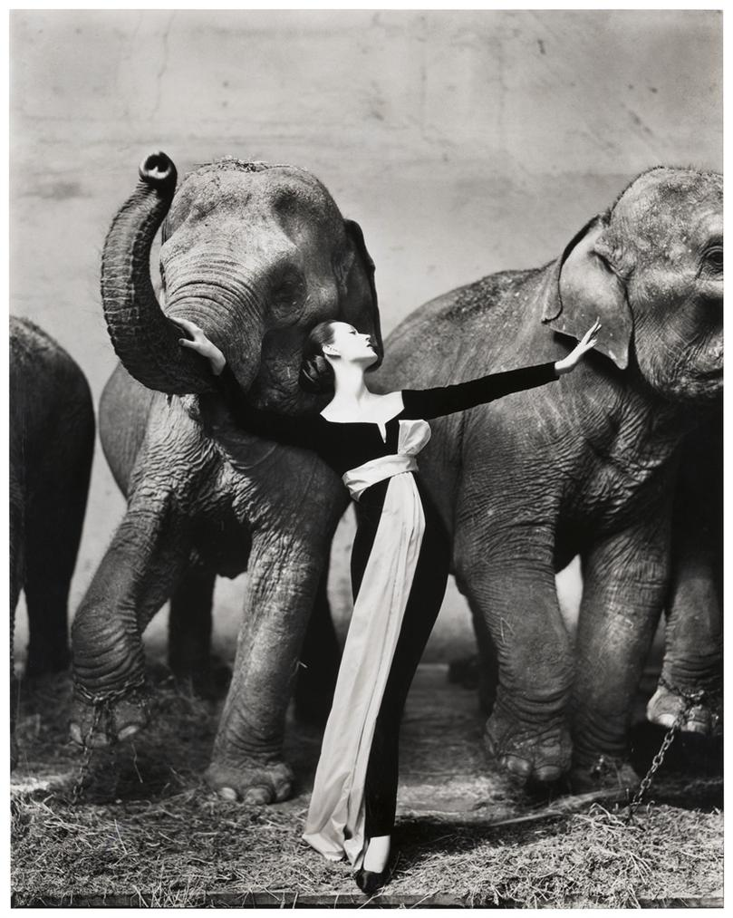Richard Avedon-Dovima With Elephants, Evening Dress By Dior, Cirque Dhiver, Paris-1955