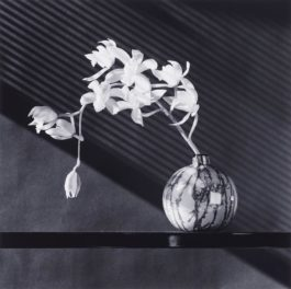 Robert Mapplethorpe-Orchids-1987