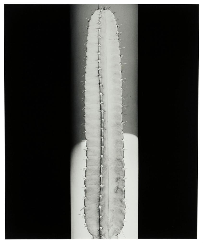 Robert Mapplethorpe-Cactus-1987