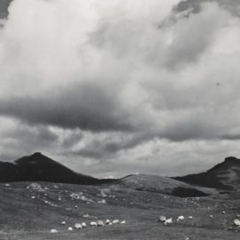 Paul Strand-Sheep On The Moor, South Uist, Hebrides-1954