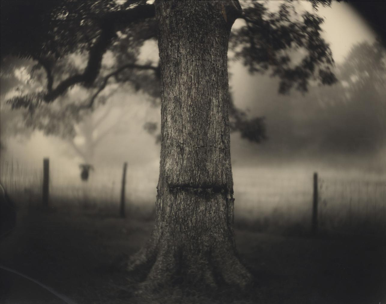 Sally Mann-Untitled (Deep South #1, Scarred Tree)-1998