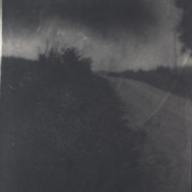 Sally Mann-Untitled (Wilderness #19)-2001