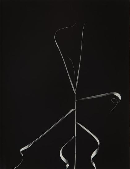 Harry Callahan-Aix-En-Provence, France-1958