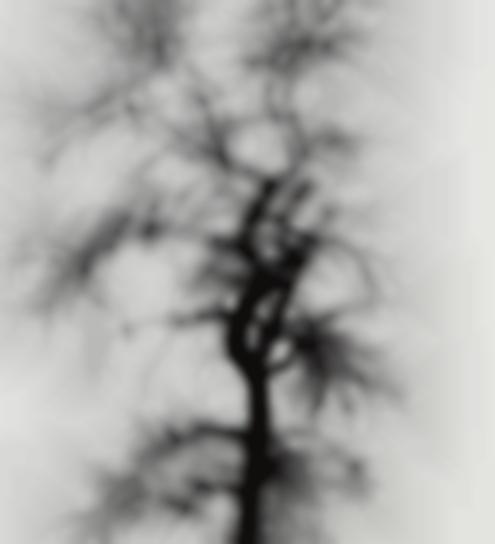 Harry Callahan-Multiple Exposure Tree, Chicago-1956