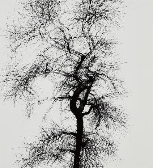 Harry Callahan-Multiple Exposure Tree, Chicago-1956