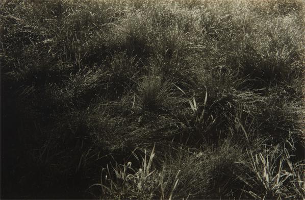 Alfred Stieglitz-Grasses-1933