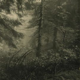 Josef Sudek-Untitled (Forest)-1948