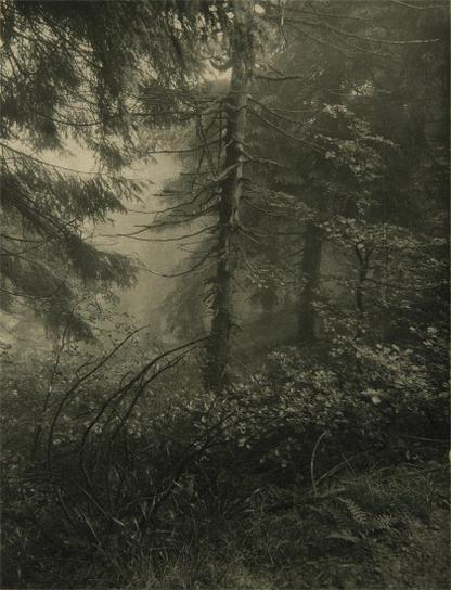 Josef Sudek-Untitled (Forest)-1948