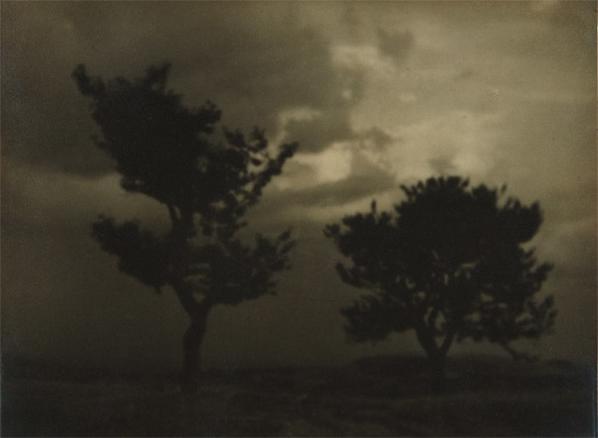 Josef Sudek-Untitled (Landscape With Trees)-1924