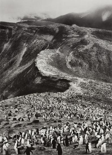 Sebastiao Salgado-Chinstrap Penguins (Pygoscelis Antarctica), Deception Island, Antarctica-2005