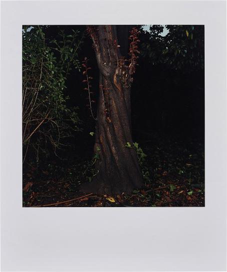 Sarah Jones - The Park (Beech) III-2003