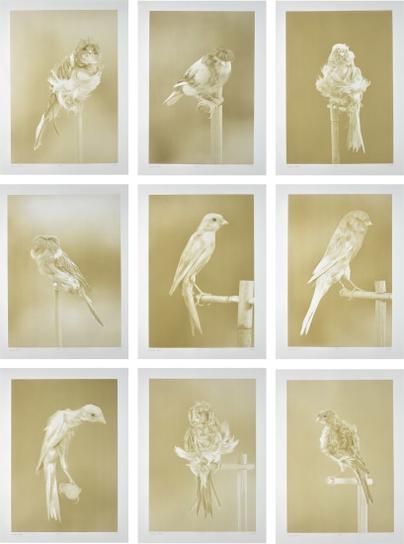 Carsten Holler-Canaries-2009
