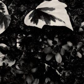 Paul Strand-The Garden (Orgeval)-1967