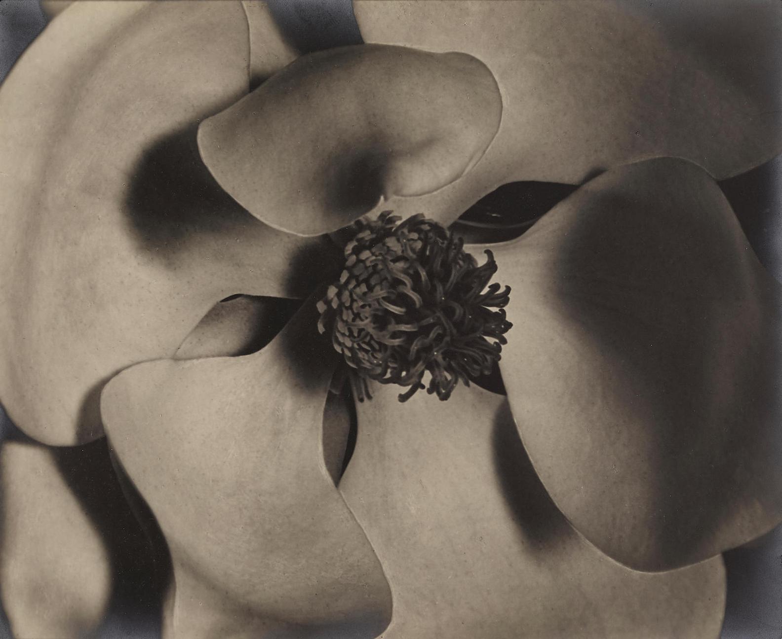 Johan Hagemeyer-Magnolia Blossom-1925