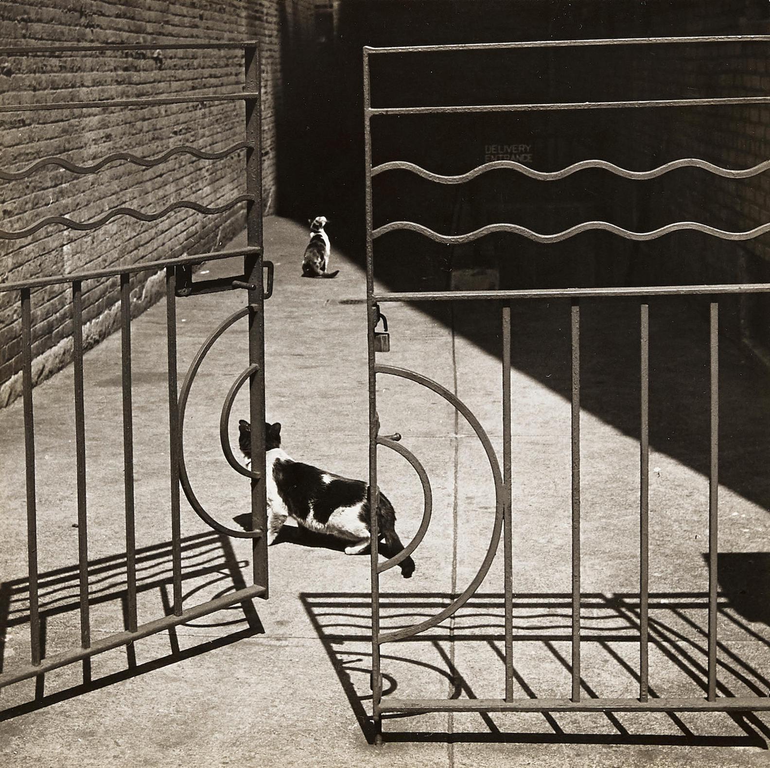 Griff Davis - Cats, Harlem-1949