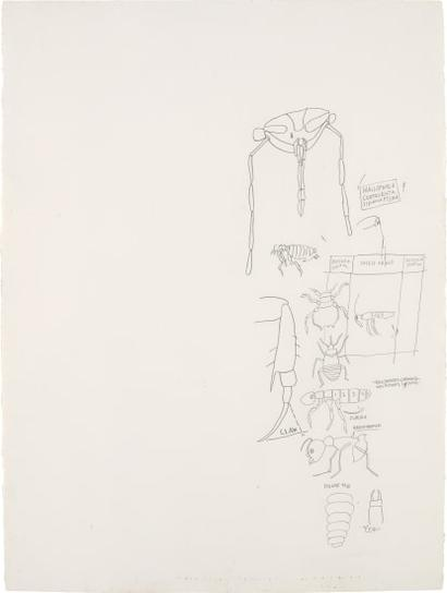 Jean-Michel Basquiat-Untitled (Insect Order)-1983