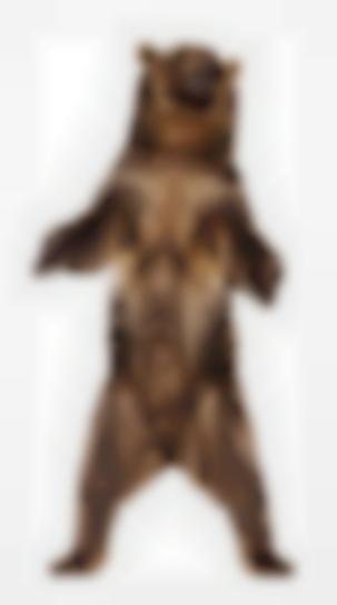 Andrew Zuckerman - Grizzly Bear 26-2009