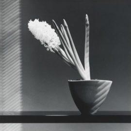 Robert Mapplethorpe-Hyacinth-1986