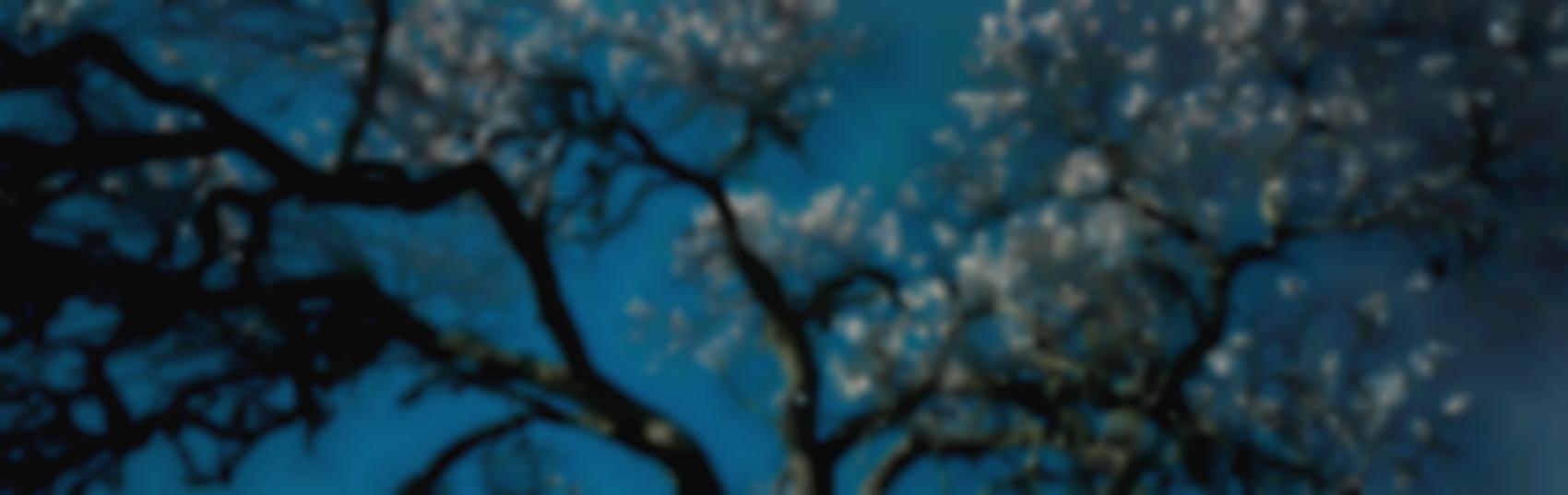 Hubertus Hamm-Almond Blossom-2004