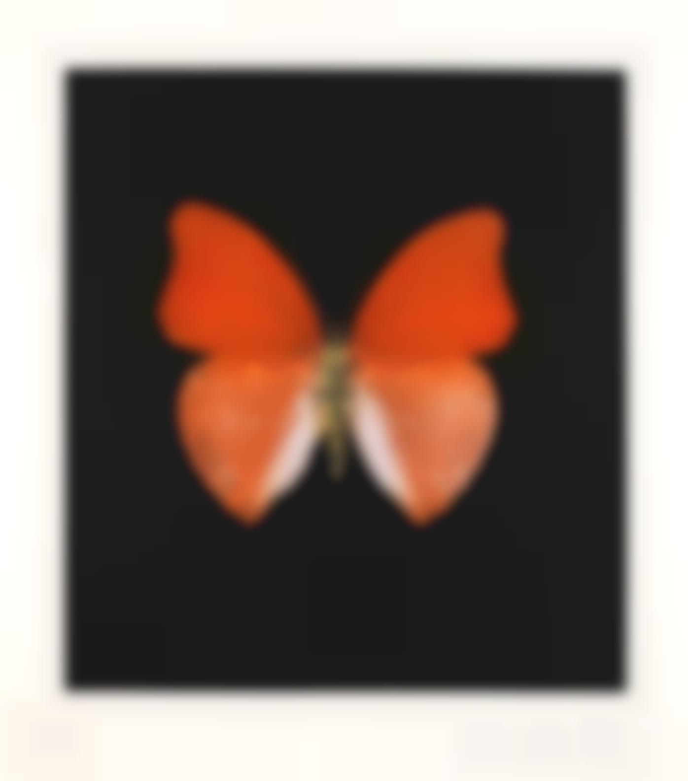 Damien Hirst-Orange Butterfly-2008